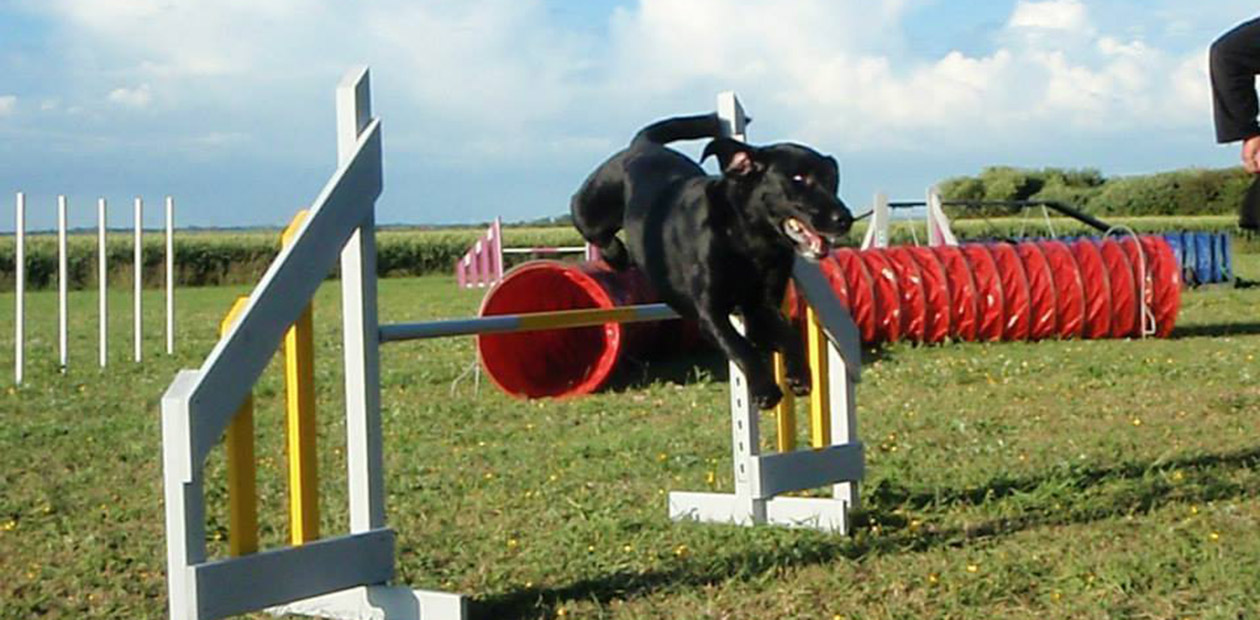 Agility i gram hundecenter, hund springer over spring